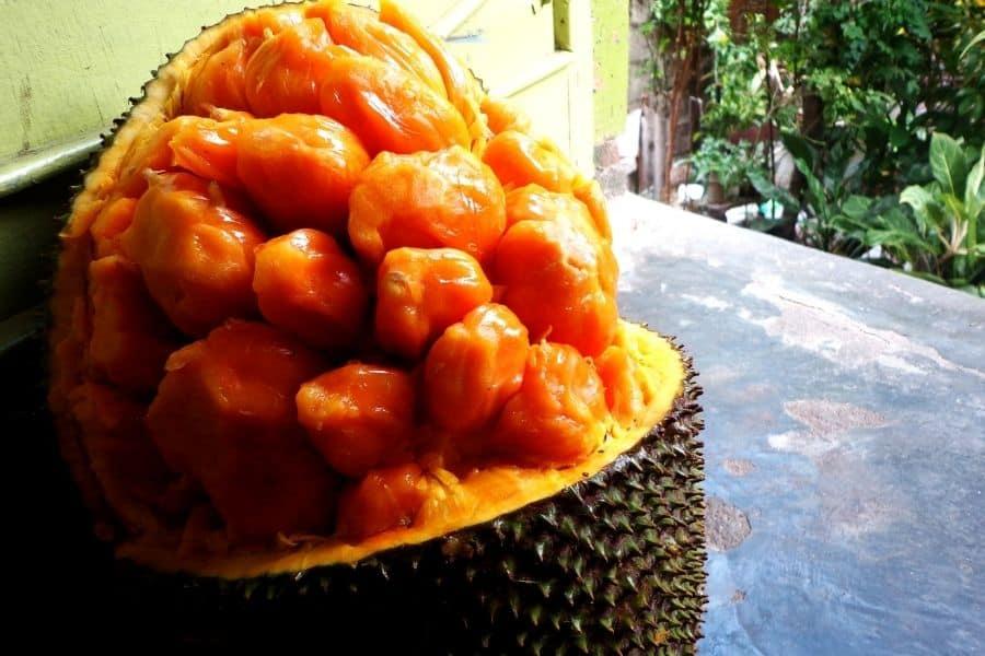 chompa gob jackfruit