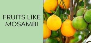 fruits like mosambi