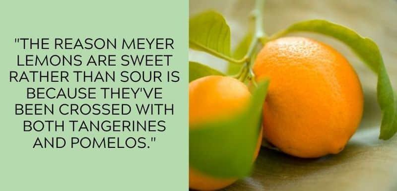 meyer lemon flavor