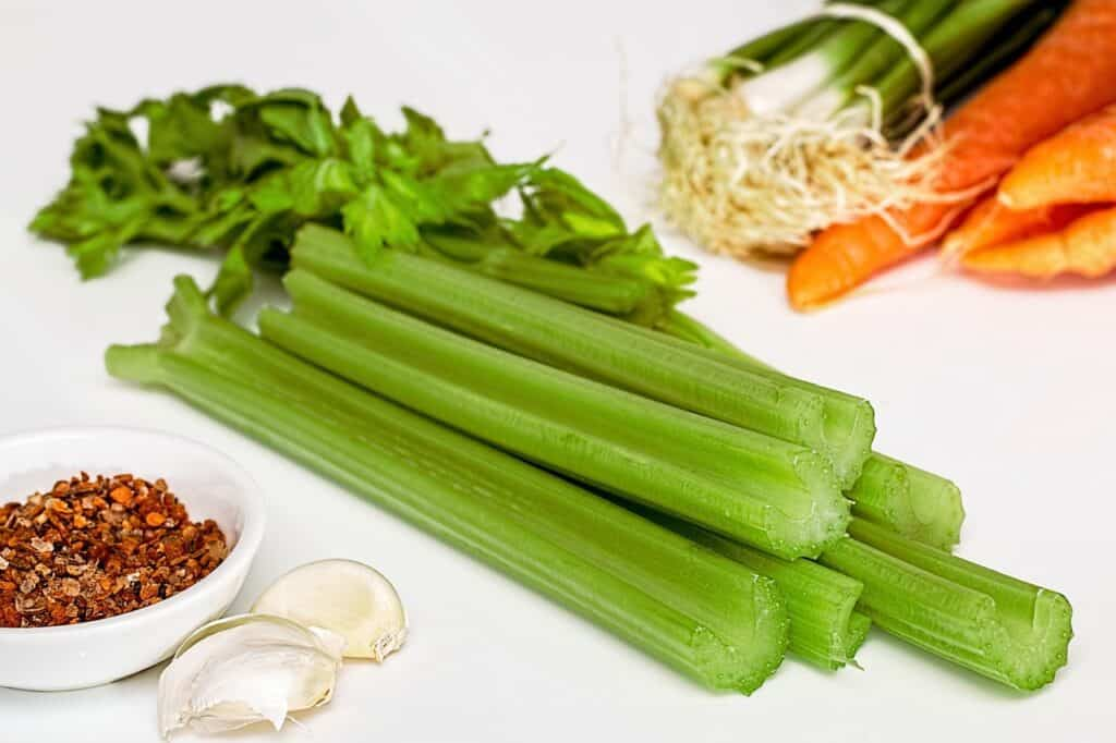 Celery is a dicot