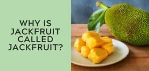 Why is jackfruit called jackfruit