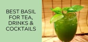 Best Basil for Tea, Drinks, and Cocktails