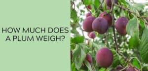 How many plums are in a pound or kg?