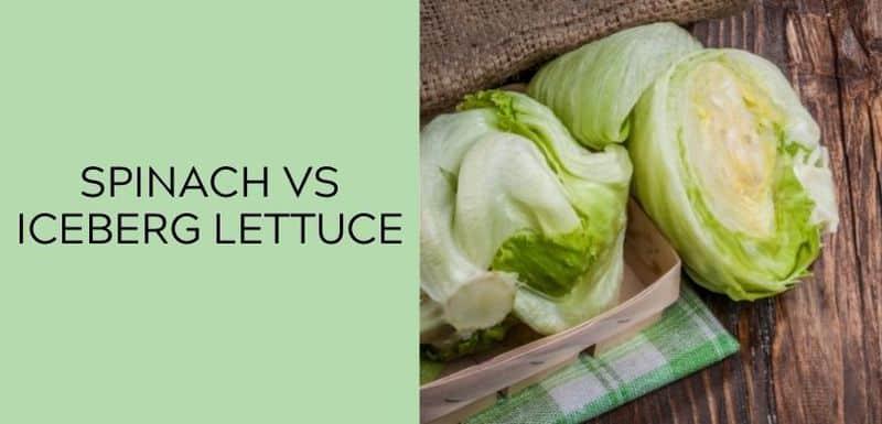spinach vs iceberg lettuce