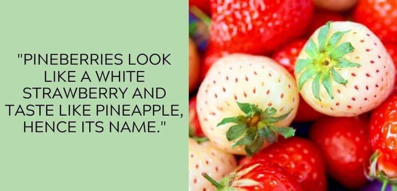 pineberry vs strawberry