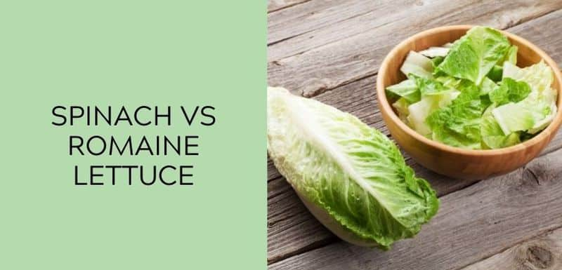 spinach vs romaine lettuce