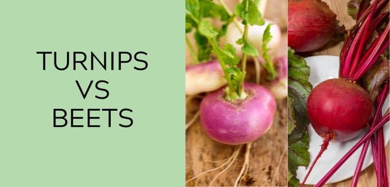 turnip vs beets