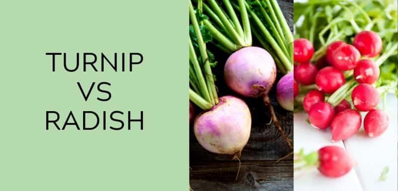 turnip vs radish