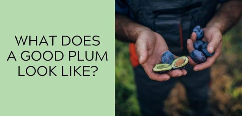 What Does a Good Plum Look Like?