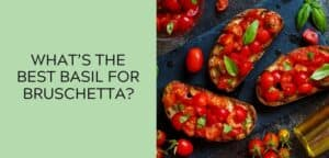 What is the best basil for bruschetta?