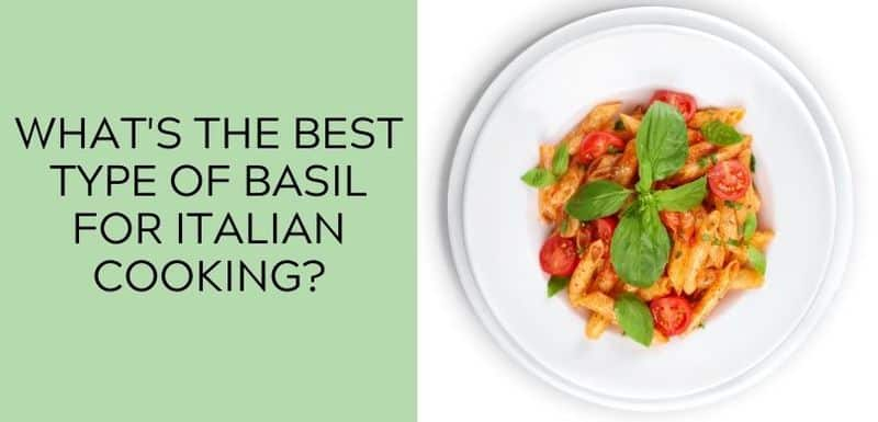 What is the best type of basil for Italian cooking?