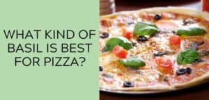 What kind of basil is best for pizza?