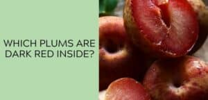 which plums are dark red inside?