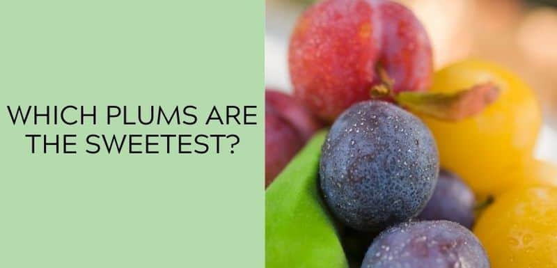 Which Plums Are the Sweetest?