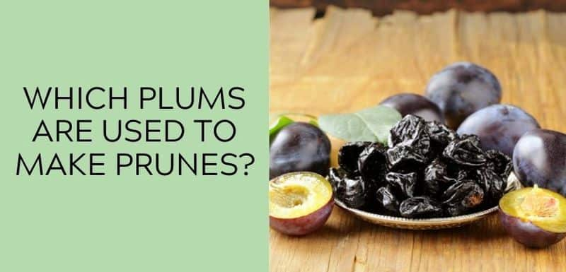 Which Plums Are Used to Make Prunes?