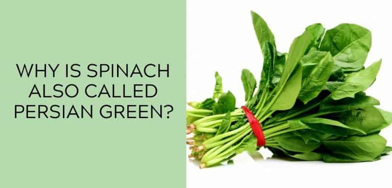 Why is Spinach Also Called Persian Green?