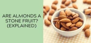 Are Almonds a Stone Fruit_ (EXPLAINED)