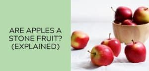 Are Apples a Stone Fruit (EXPLAINED)
