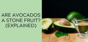 Are Avocados a Stone Fruit (EXPLAINED)