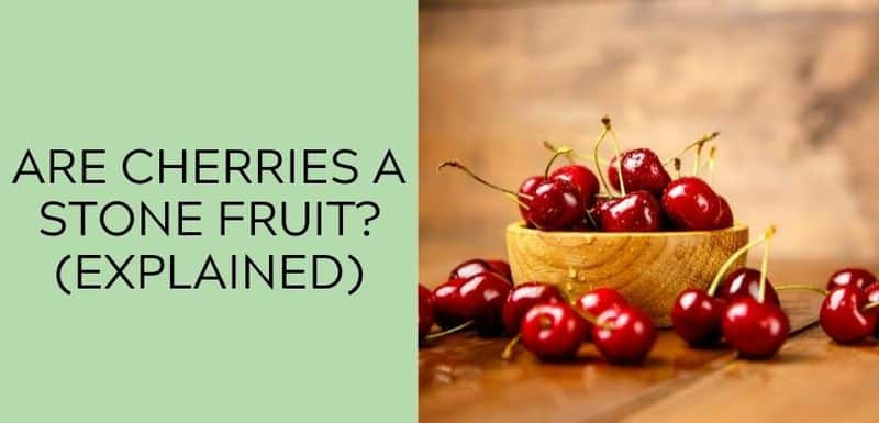 Are Cherries a Stone Fruit_(EXPLAINED)