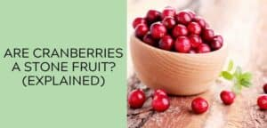 Are Cranberries a Stone Fruit (EXPLAINED)