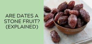 Are Dates a Stone Fruit_ (EXPLAINED)