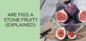 Are Figs a Stone Fruit (EXPLAINED)