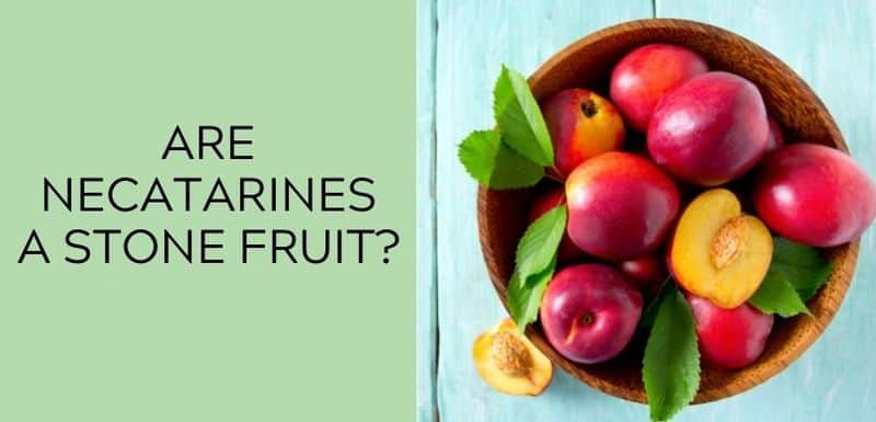 Are Nectarines a Stone Fruit