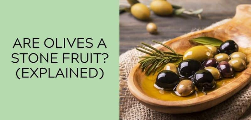 Are Olives a Stone Fruit (EXPLAINED)
