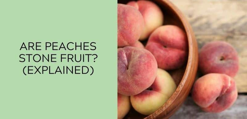 Are Peaches a Stone Fruit (EXPLAINED)