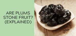 Are Plums a Stone Fruit (Explained)