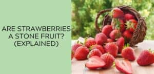 Are Strawberries a Stone Fruit (EXPLAINED)