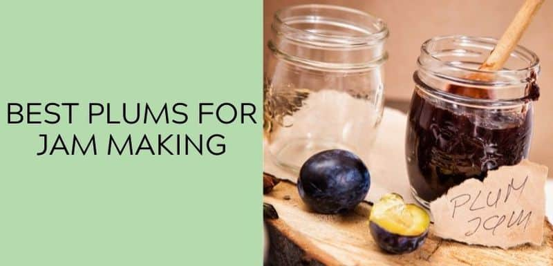 Best Plums for Jam Making