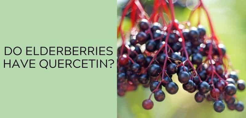 Do elderberries have Quercetin?