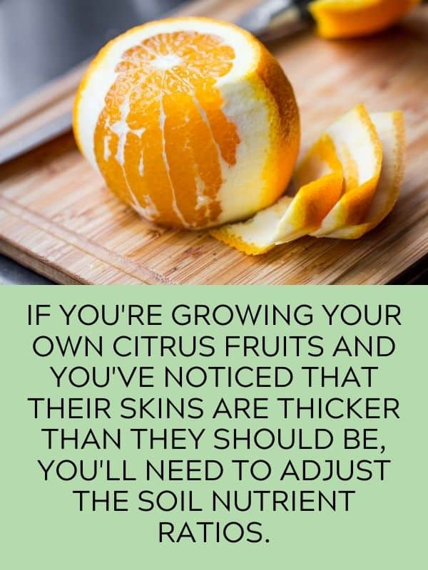 thick skin citrus