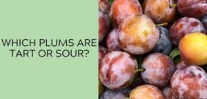Which Plums Are Tart or Sour? Tart & Sour Plum Varieties