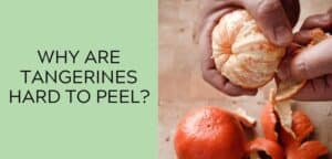 Why are Tangerines Hard to Peel?