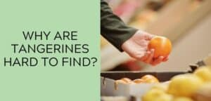 Why are tangerines hard to find?